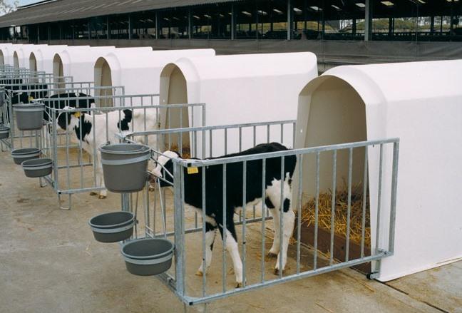 Домик для теленка стандарт от РусАгроСистема