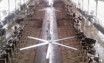 вентилятор для коровника потолочный русагросистема 2